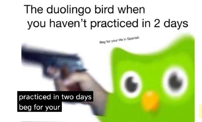 Funny_Duolingo_Owl_Gun